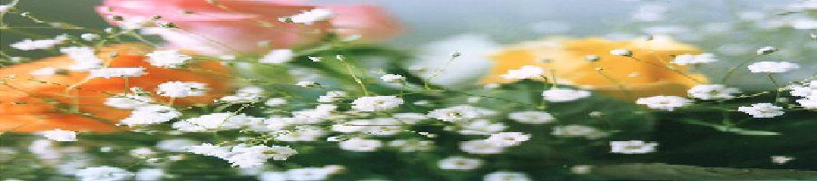 かすみ草とバラ